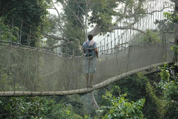canopy03.JPG